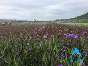 Tưới phun mưa trang trại rau sạch fvf nghệ an