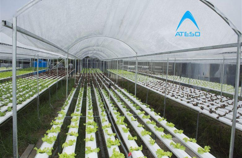 Phương pháp trồng cây trong nhà kính