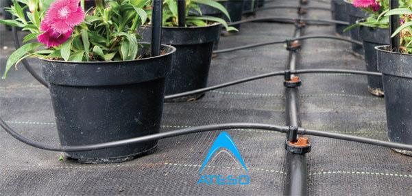 Ống LDPE 16mm dẫn nước tới các nhánh tưới