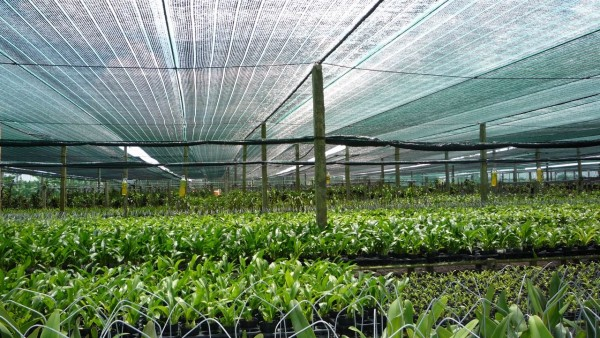 Ứng dụng lưới cắt nắng trong che phủ nhà ươm