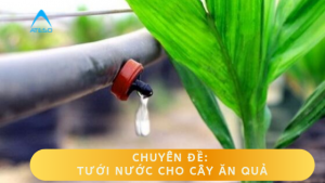 Tưới nước cho cây ăn quả