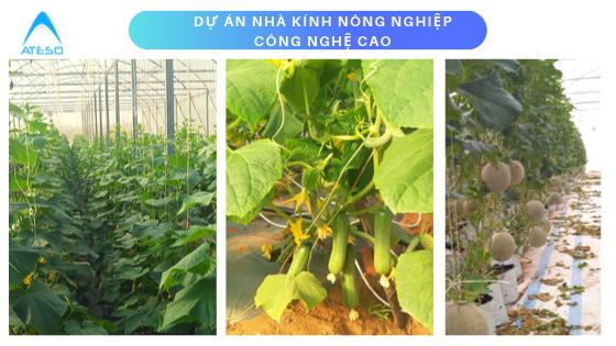 dự án nhà kính nông nghiệp công nghệ cao