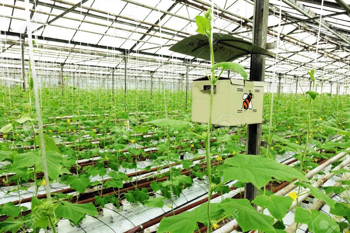 màng phủ nông nghiệp Ateso