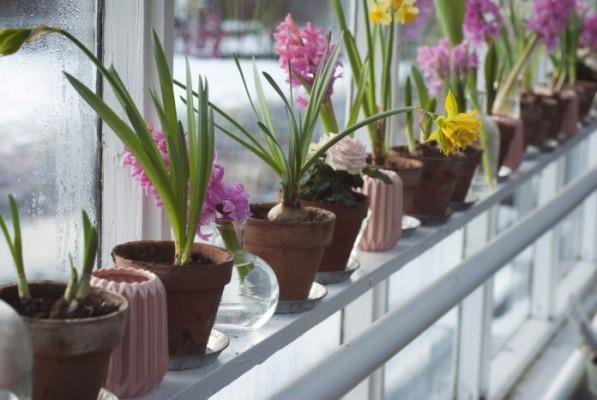 trồng cây trong nhà kính