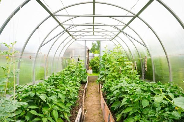 nhà kính trồng rau tại nghệ an hà tĩnh