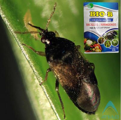 Chế phẩm sinh học BIOB trị bọ cánh cứng